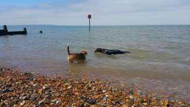 Information on bringing your dog to the beach